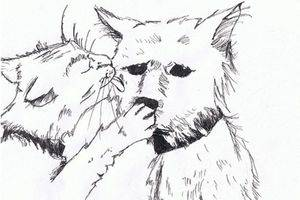 'Cat and dog,' pen-and-ink drawing by Jessie Pohl, from Autochthonous,  poetry by Dan Pohl